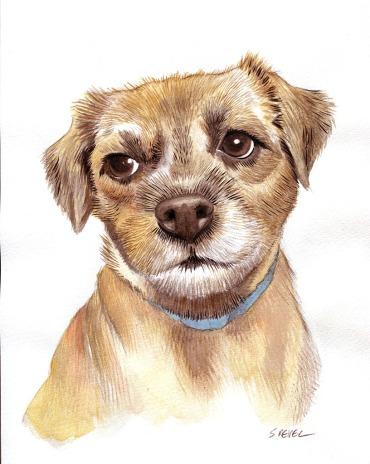 étude portrait chien